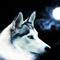 1287650821_1024x768_artistic-grey-wolf-wallpaper.jpg